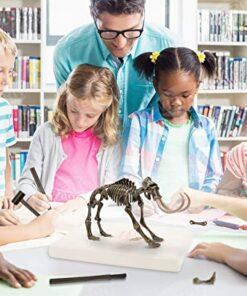 Dinosaurs Skeleton Set