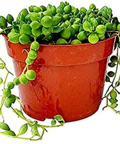 Plants Rooted In Pots